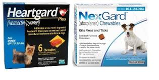 ivermectin for fleas. Wonderful For NexGard And Heartgard Combo For Dogs 101  24 Lbs 6 Pack Inside Ivermectin For Fleas Discount Pet Medication