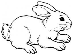 realistic rabbit coloring pages. Fine Realistic Realistic Rabbit Coloring Pages Printable In Pinterest