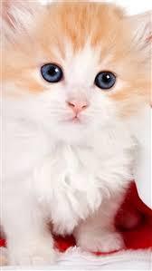 257 2 cute lovely hat kitten iphone se wallpaper