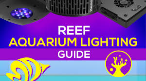Saltwater Aquarium Lighting Guide Reef Aquarium Lighting Guide What Is The Right Par For Vibrant Coral Coloration And Growth