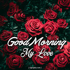 good morning my love roses qgrapha com