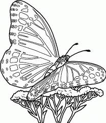 Butterfly With Flowers Coloring Pages For Printable - glum.me