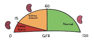Gfr Rate Chart Glomerular Filtration Glomerulus Renal Physiology