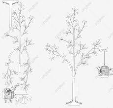 無料ダウンロードのための木と鳥籠 スケッチ ベクトル ロマンチックpng
