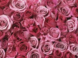 wallpaper with pink chandelier wallpaper pink 91w4degmh l sl1500