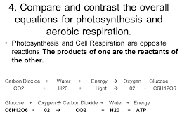 compare and contrast the overall equations for photosynthesis and aerobic respiration