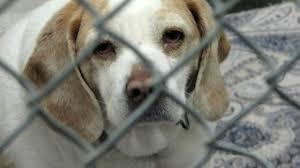 animal shelters sad.  Sad To Animal Shelters Sad A