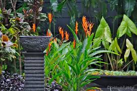 Small Picture Our Australian Gardens Tabu Tropical Paradise in Cairns Queensland