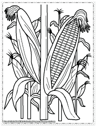 Small Picture Corn Coloring Pages Elioleracom