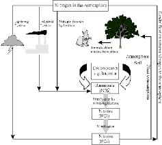 Global Cycles The Nitrogen Cycle Grade 10