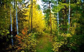 Resultado de imagen de bosque hermoso