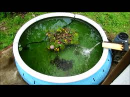initial results for pressurized homemade pond filter made from rain barrel