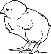 Small Picture Free Printable Little Baby Chick Coloring Page for Kids