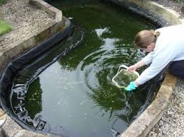 cleaning out a pond when how to clean a garden pond safely