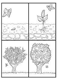 Kleurplaat Appelboom Cyclus Afb 7074 Images