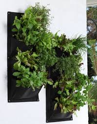 13 Of The Best New Zealand Native Ground Cover Plants  StuffconzWall Climbing Plants Nz