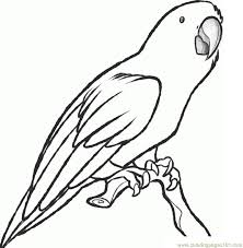 Small Picture Parrot Coloring Page Free Parrots Coloring Pages