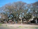 imagem de Nova Prata Rio Grande do Sul n-13