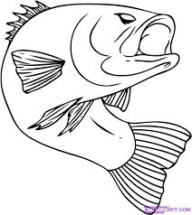 bass fish drawing step by step.  Step Fish Pictures To Color  How Draw A Bass Step By Step Fish Animals  FREE Online Drawing  Inside Bass Fish By Pinterest
