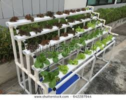 hydroponics garden. Vegetable Garden With Hydroponics Method.Hydroponics Garden. A