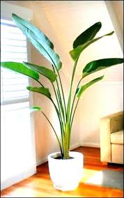 best tropical plants canada indoor trees good low light tree