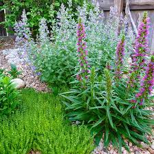 groundcover flowers add character to a rock garden