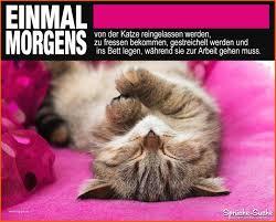 Lustige Bilder Mit Text Schön Lustige Sprüche über Katzen Arbeit