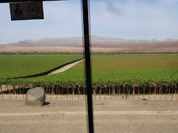 vineyards in namibia along the fish