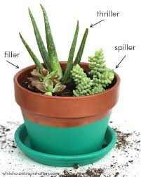 how to make a succulent garden. Brilliant Succulent The RIGHT Way To Make A Succulent Garden And Tutorial On How This  Color Blocked Planter To How Make A Succulent Garden R