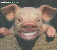 Porcicultura ComPrecio Granja De Cerdos Engorde