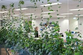 office plant displays. Brilliant Office Breakout Areas And Meeting  Indoor Plants Displays From Ambius With Office Plant Displays A