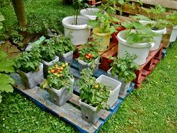 container gardening. Pots And Buckets On Pallets To Avoid Contact With The Soil (bugs, Infections, Container Gardening