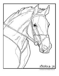 Small Picture Free Horse Pictures To Color horse coloring page 1 232x300 Horse