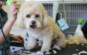 Dog Grooming Hair Length Chart Luxury Things Your Dog