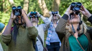 if there s one essential tool for birders it s binoculars but with so many models on the market it can be daunting to find the perfect pair