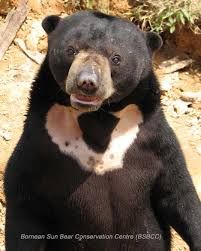 The Eight 8 Bear Species Of The World Bear With Us