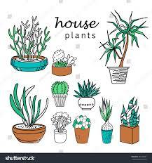 best indoor office plants. Best Desk Plants Cool Office Furniture Indoor  Best Indoor Office Plants