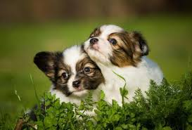 If You Love Animals Dont Clone Your Pet