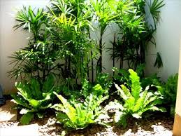 Small Picture 38 best My tropical looking garden inspirations images on