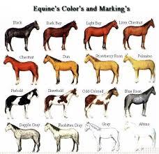 Horse Size Comparison Chart Horse Breed Descriptions