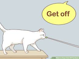 image titled keep cats off furniture step 10