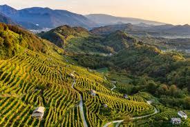 Conegliano Valdobbiadene Prosecco Superiore Docg: crescono volumi e valori,  in Italia e nel mondo - WineNews