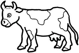Cow Coloring Picture Chicken Coloring Pages Cow Page Cattle Coloring