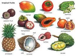 tropical fruits. Simple Tropical Tropical Fruits For