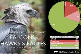 Chart The Worlds Most Endangered Falcons Eagles Hawks
