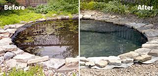 get rid of algae in your garden pond