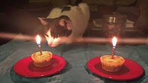 How To Make A Birthday Cake For Your Cat Mnn Mother Nature Network