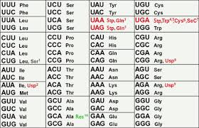 Universal Genetic Code Chart Answers Simulated Lab