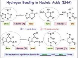 23 03 Base Pairing And Hydrogen Bonding In Nucleic Acid Polymers
