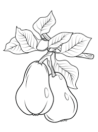 Small Picture Two pears on branch coloring page Free Printable Coloring Pages